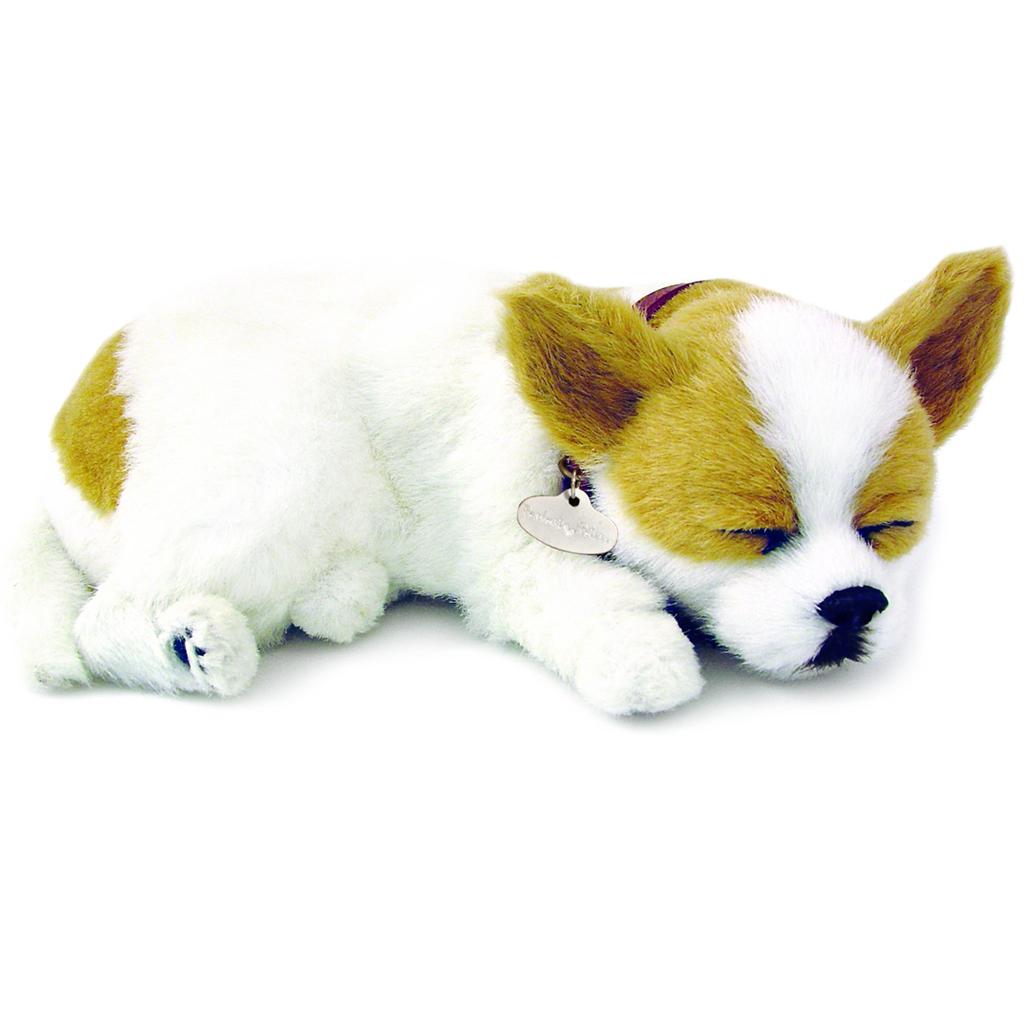 Chihuahua Bundle