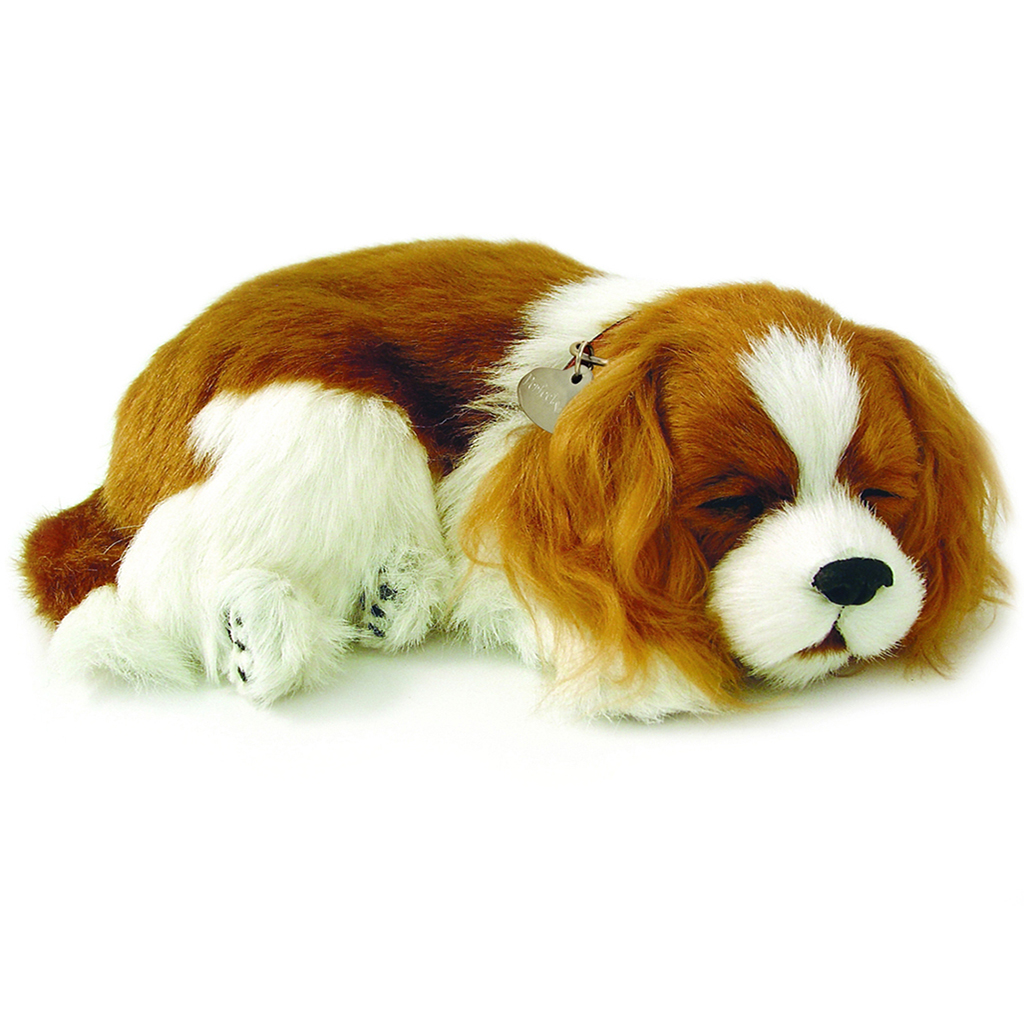 Cavalier King Charles Bundle