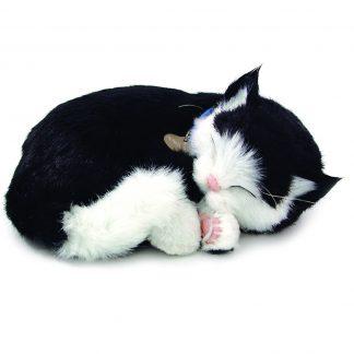 Black white Shorthair cat bundle
