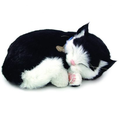 Black white Shorthair cat bundle